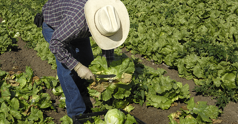 farm-worker-lettuce-getty-promo.jpg